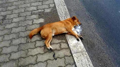 Ufficio Sta Bocconi by Allarme Bocconi Avvelenati A Calvisano 8 Cani Morti In