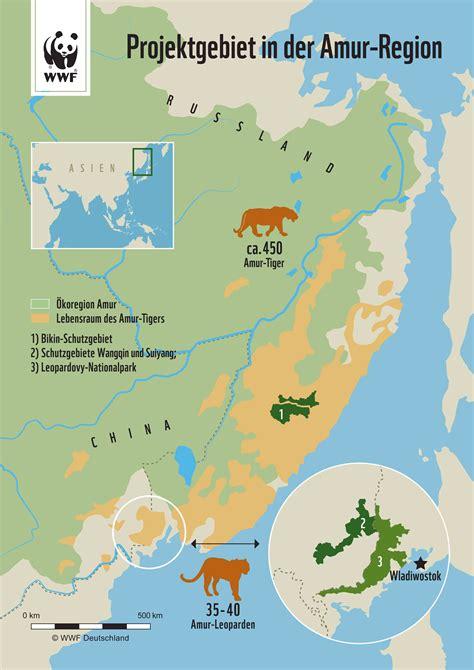 Amurregion Wälder Für Die Tiger  Wwf Deutschland