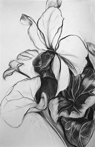 Eileen Mislove : Flowers : Flowers - Charcoal Drawings