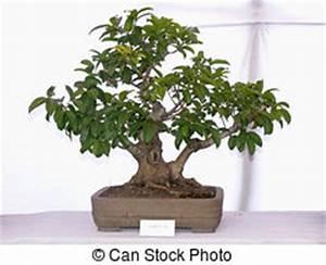 Bonsai Baum Schneiden : bonsai schneiden bonsai baum japanisches hand fenster schneiden shoji front schieben ~ Frokenaadalensverden.com Haus und Dekorationen