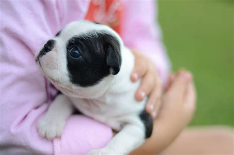 baby puppies baby puppies images reverse search