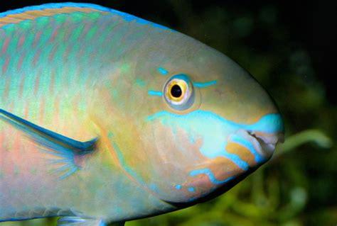 poisson en ligne aquarium 28 images vente en ligne poissons aquarium aquariophilie aquarium