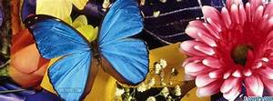 blue butterfly pink flower Facebook Cover timeline photo ...