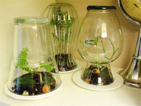 terrarium design 20 ideas for home decorating with glass plant terrariums unique eco gifts