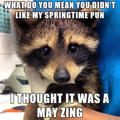 Bad Pun Raccoon Meme - 1000 images about puns on pinterest jokes tim vine and help wanted