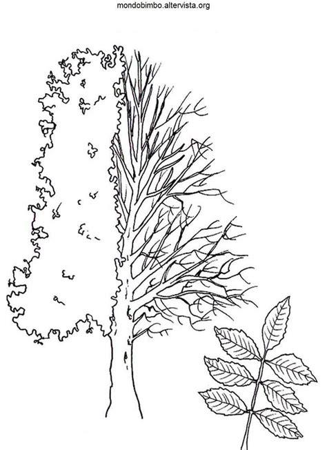 alberi da frutto da colorare mondo bimbo