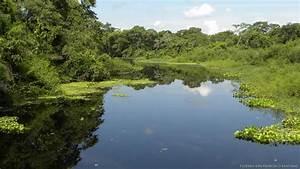 Pantanal Viagens Agncia De Turismo