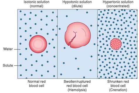 animal cells    put