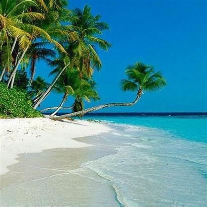 Tropical Beaches Ocean Flounce Spring Palm Trees