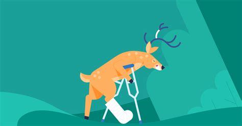 insurance cover hitting  deer progressive