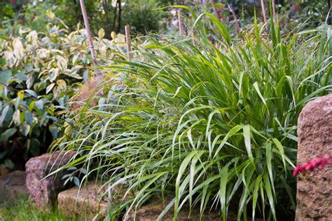 Pflanzen Für Schattigen Garten by Schattenpflanzen Pflanzen F 252 R Schattige Standorte Und