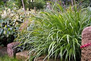 Pflanzen Für Trockene Schattige Standorte : sichtschutz pflanzen schattig die neueste innovation der ~ Michelbontemps.com Haus und Dekorationen