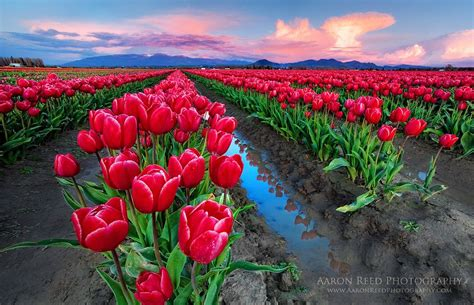 colorful flower fields  photography art