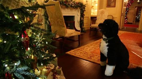 bo inspects   white house holiday decorations youtube