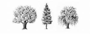 Cómo dibujar árboles a lápiz para que se vean realistas