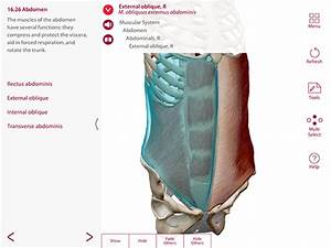 How To Design Lessons Using 3d Anatomy Apps  A Step