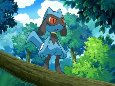 riolu anime pokemon wiki fandom powered  wikia