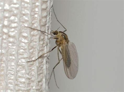 Tipps Gegen Mücken by Was Hilft Gegen M 252 Cken Markt De