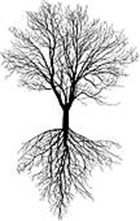 apple tree with roots drawing clipart of apple tree without leaves with root k22140381