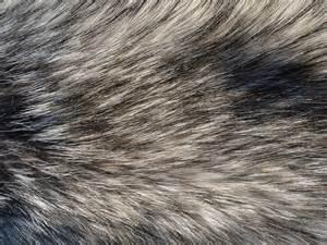 Fur Texture 16 by Fox-N-Wolf on DeviantArt