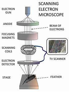 Microscopes  U2013 Biology As A Level  U2013 Revision Notes