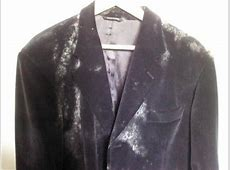 Mold Growing on Clothes and Shoes Unbiased Mold Testing