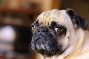 Annoyed Dog Face | www.pixshark.com - Images Galleries ...
