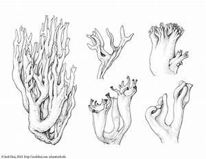 Botany : Coral Fungi on Illustration Served