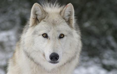 se loger bureaux parc des loups du gevaudan leger de peyre