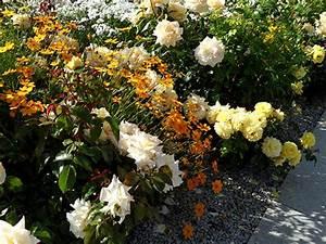 Rosenbeet Mit Stauden : rosen pflanzen sortenauswahl pflanzung pflege arkadia gartengestaltung berlin ~ Frokenaadalensverden.com Haus und Dekorationen