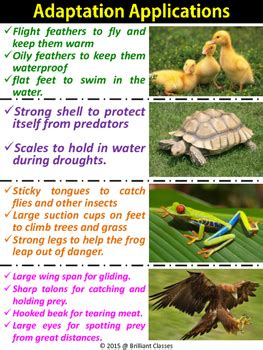 animal adaptations colorful posters  classroom tpt