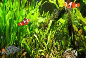 Desktop Fish Tanks Aquariums Screensavers