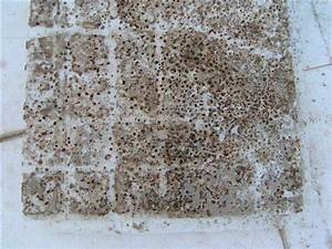 Ameisen In Der Wand : ameisen forum auf ~ Frokenaadalensverden.com Haus und Dekorationen