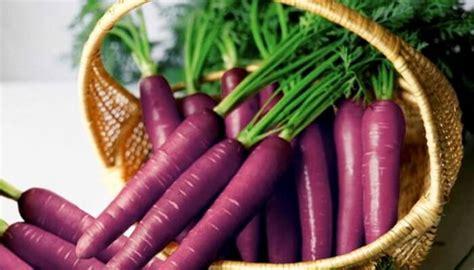zanahoria morada origen propiedades recetasy mas