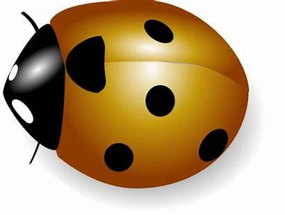 Coccinelle Clip Ladybug Vector Orange Svg Clipart