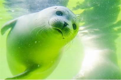 Animals Sea Water Underwater Animal Marine Seal