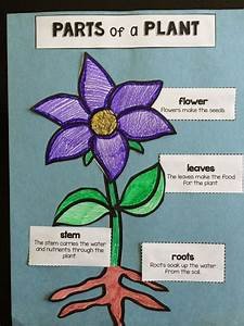 Parts Of A Plant  Activities To Do And Activities On Pinterest