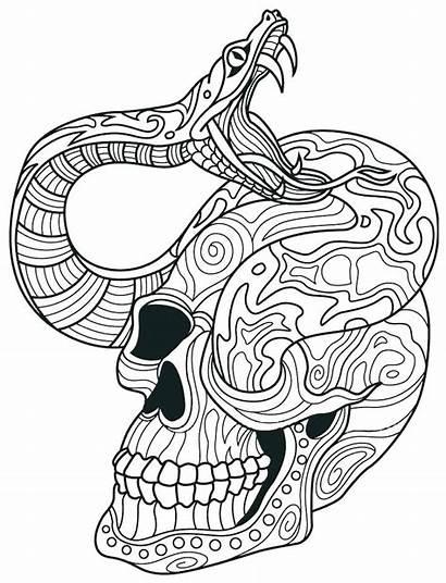 Snake Coloring Skull Rattlesnake Skulls Sugar Adult