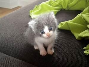 Auto Parts Somain : chatons gris et blanc donner angers maine et loire 49 sur animaux fr ~ Medecine-chirurgie-esthetiques.com Avis de Voitures