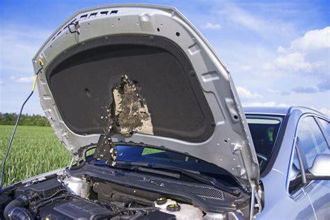 marder auto schutz marder im motorraum so sch 252 tzen sie ihr auto ebay