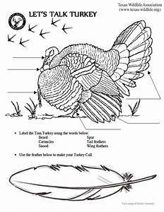Let U0026 39 S Talk Turkey Anatomy Page