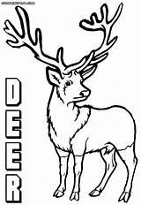 Deer Coloring Pages Print Animal Colorings sketch template