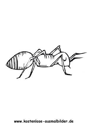 ausmalbilder ameise  tiere zum ausmalen malvorlagen