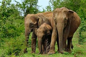 Holiday Tour Packages Sri Lanka, Hotels and Rental cars