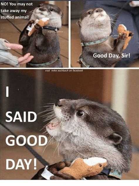 Good Day Sir Meme - no you may not take away my stuffed animal visit mike eschbach on facebook said good day good
