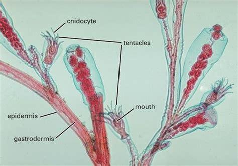 under sponge storage explore animal diversity with microscope slides carolina com