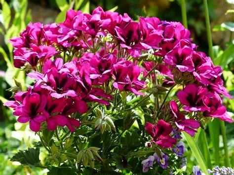 tanaman hias bunga cantik lucu
