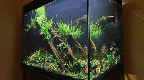 Aquascape How To by How To Aquascape A Planted Tank Eafreshwater 900