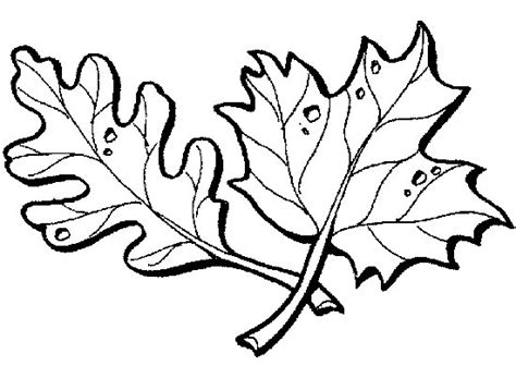 Ivy Leaf Pages Coloring