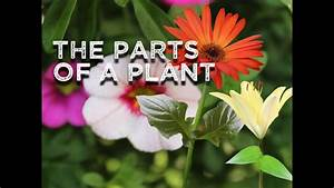 The Parts Of A Plant  Song For Kids About Flower  Stem